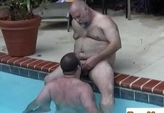 Polar bear dicksucked in the pool